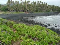 Naalehu beach: Punalu'u Black Sand Beach Park