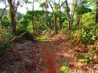Honokaa hikes