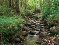 Kaneohe hikes