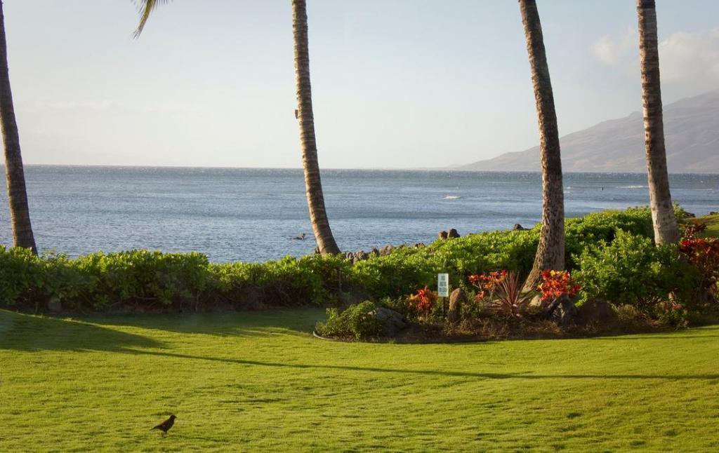 My Waii Beach Cottage 1br
