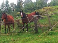 Kula thingtodo: Horseback riding at the Thompson Ranch