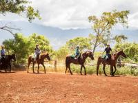 Haleiwa thingtodo: Happy Trails Horseback Rides