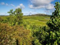 Kailua thingtodo: Na Pohaku O Hauwahine - Kawainui Marsh State Park Reserve
